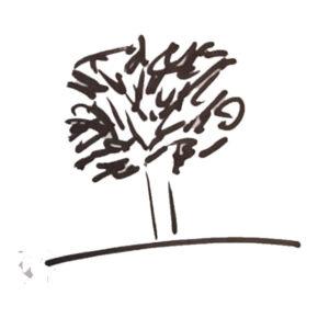 Baumtest Zeichnungen nach dem Schweizer Psychologen Dr. Charles Koch